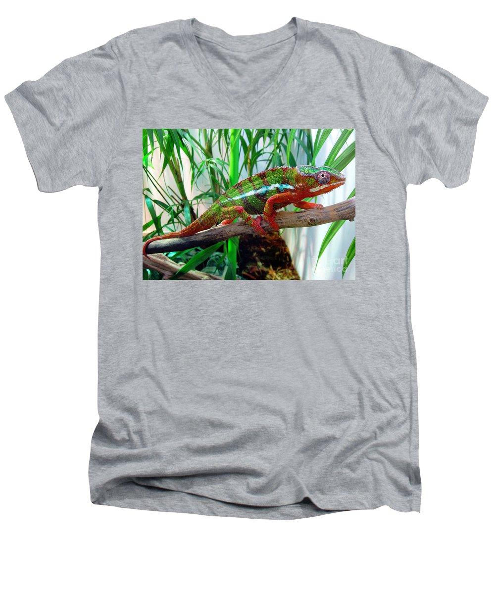 Chameleon Men's V-Neck T-Shirt featuring the photograph Colorful Chameleon by Nancy Mueller