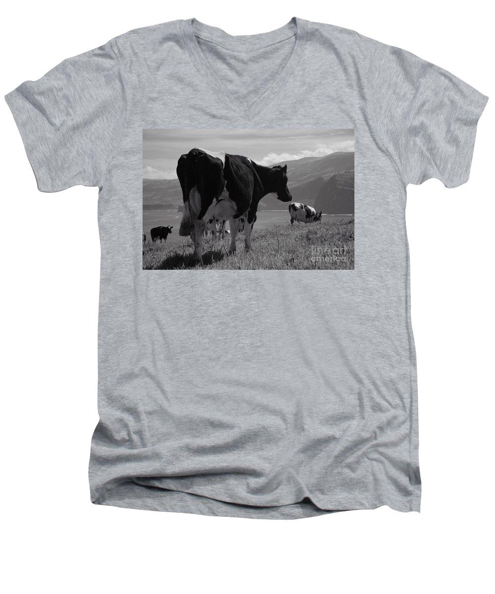 Azoren Men's V-Neck T-Shirt featuring the photograph Cows by Gaspar Avila