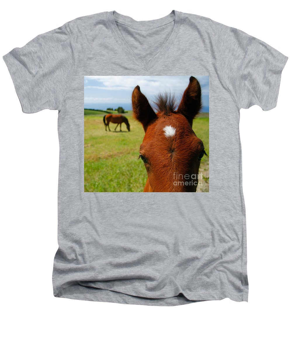 Farm Men's V-Neck T-Shirt featuring the photograph Curious Colt by Gaspar Avila
