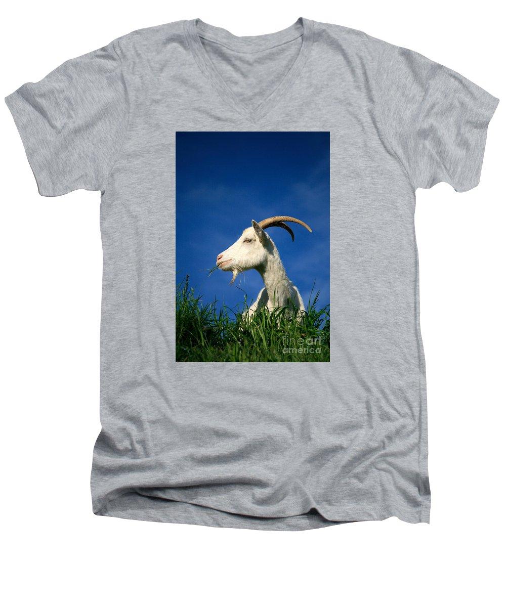 Animals Men's V-Neck T-Shirt featuring the photograph Goat by Gaspar Avila
