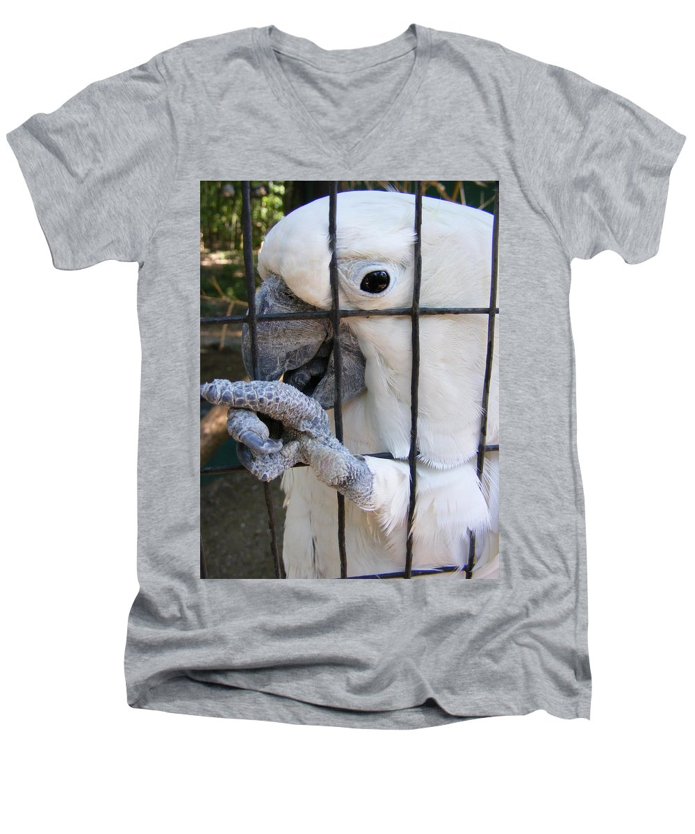 Bird Men's V-Neck T-Shirt featuring the photograph Hand Me The Key Please by Ed Smith