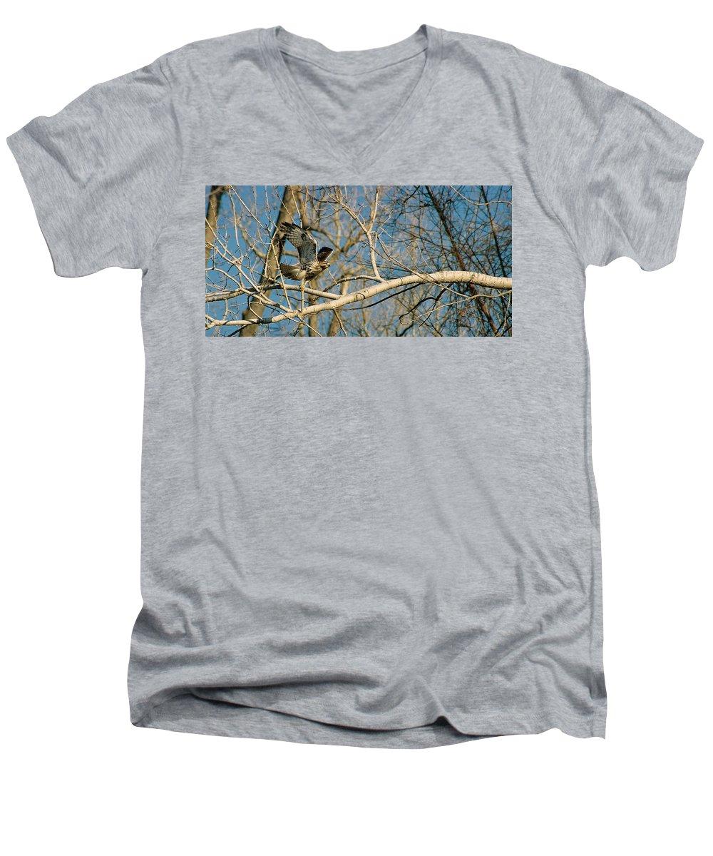 Hawk Men's V-Neck T-Shirt featuring the photograph Hawk by Steve Karol