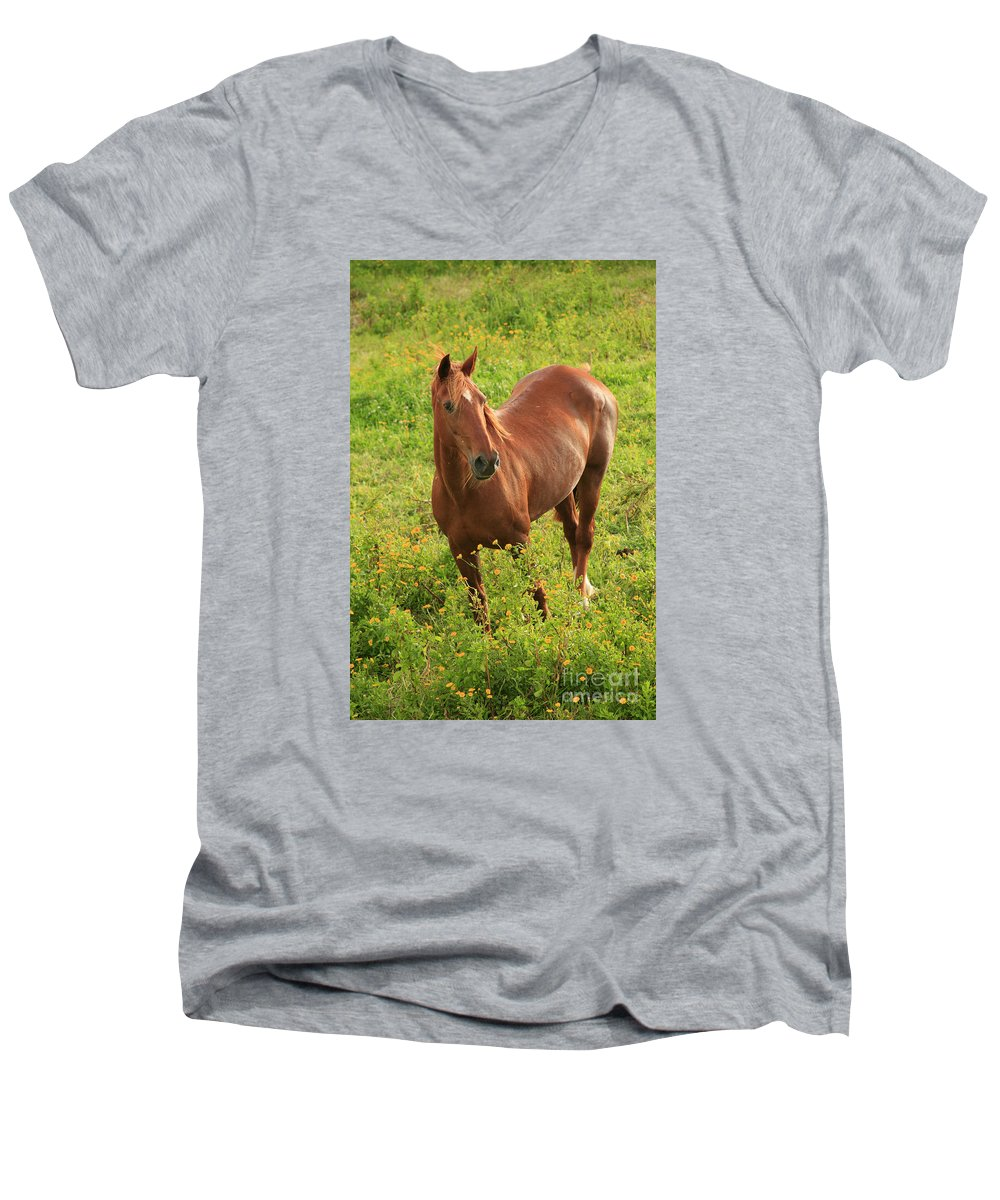 Animals Men's V-Neck T-Shirt featuring the photograph Horse In A Field With Flowers by Gaspar Avila