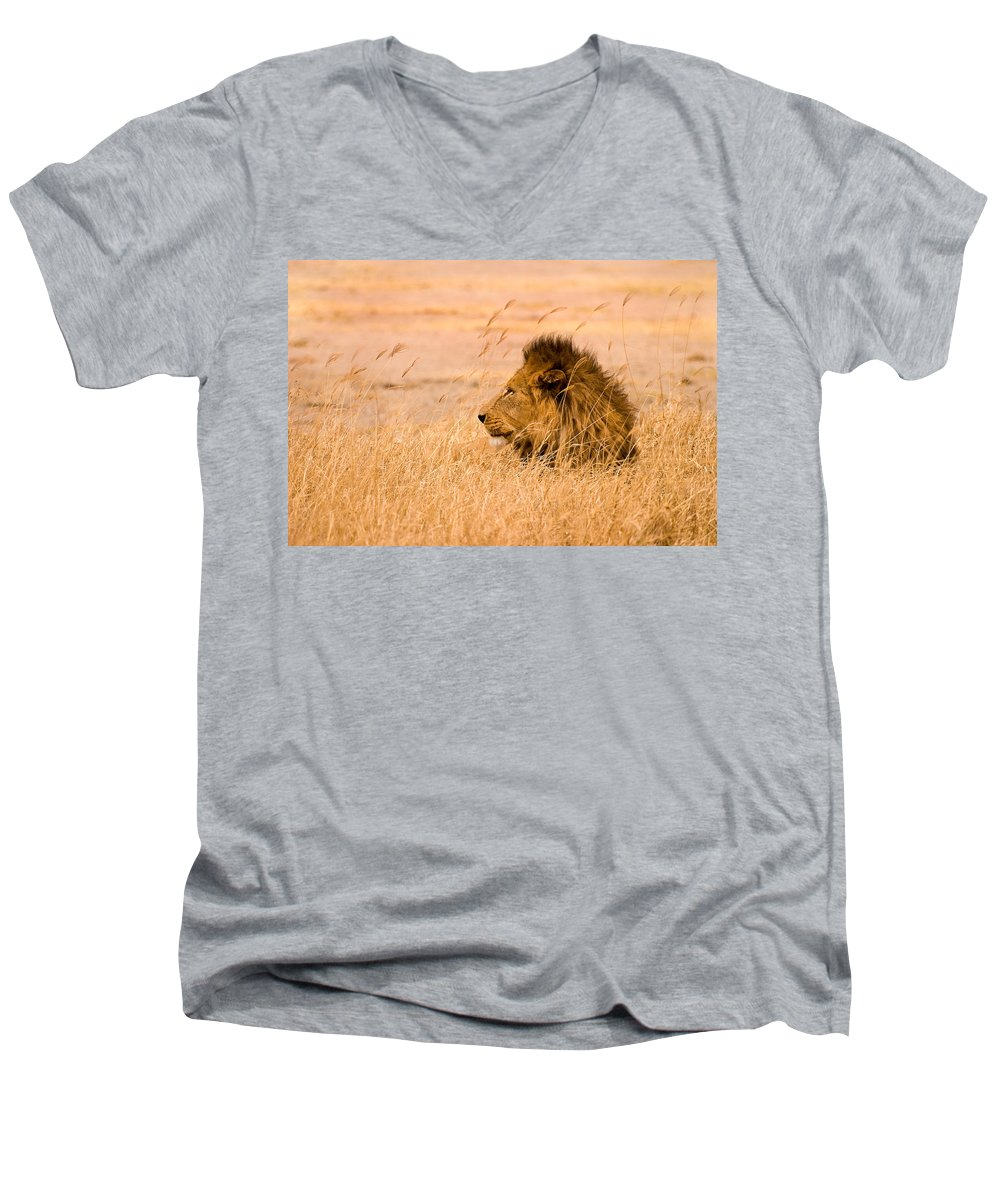 3scape Men's V-Neck T-Shirt featuring the photograph King Of The Pride by Adam Romanowicz