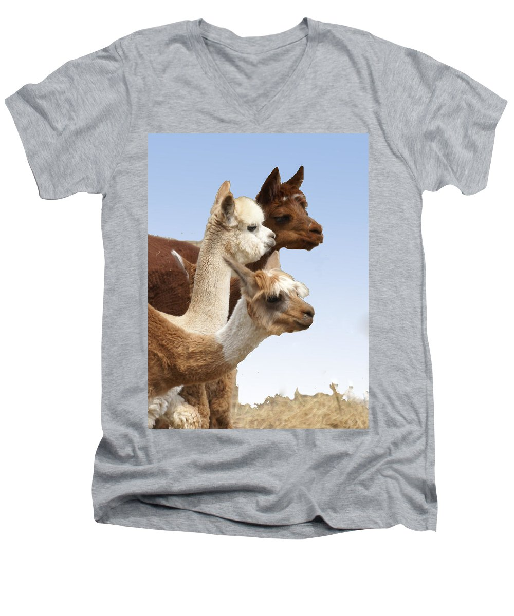 Llama Men's V-Neck T-Shirt featuring the photograph Llama's Three by Heather Coen