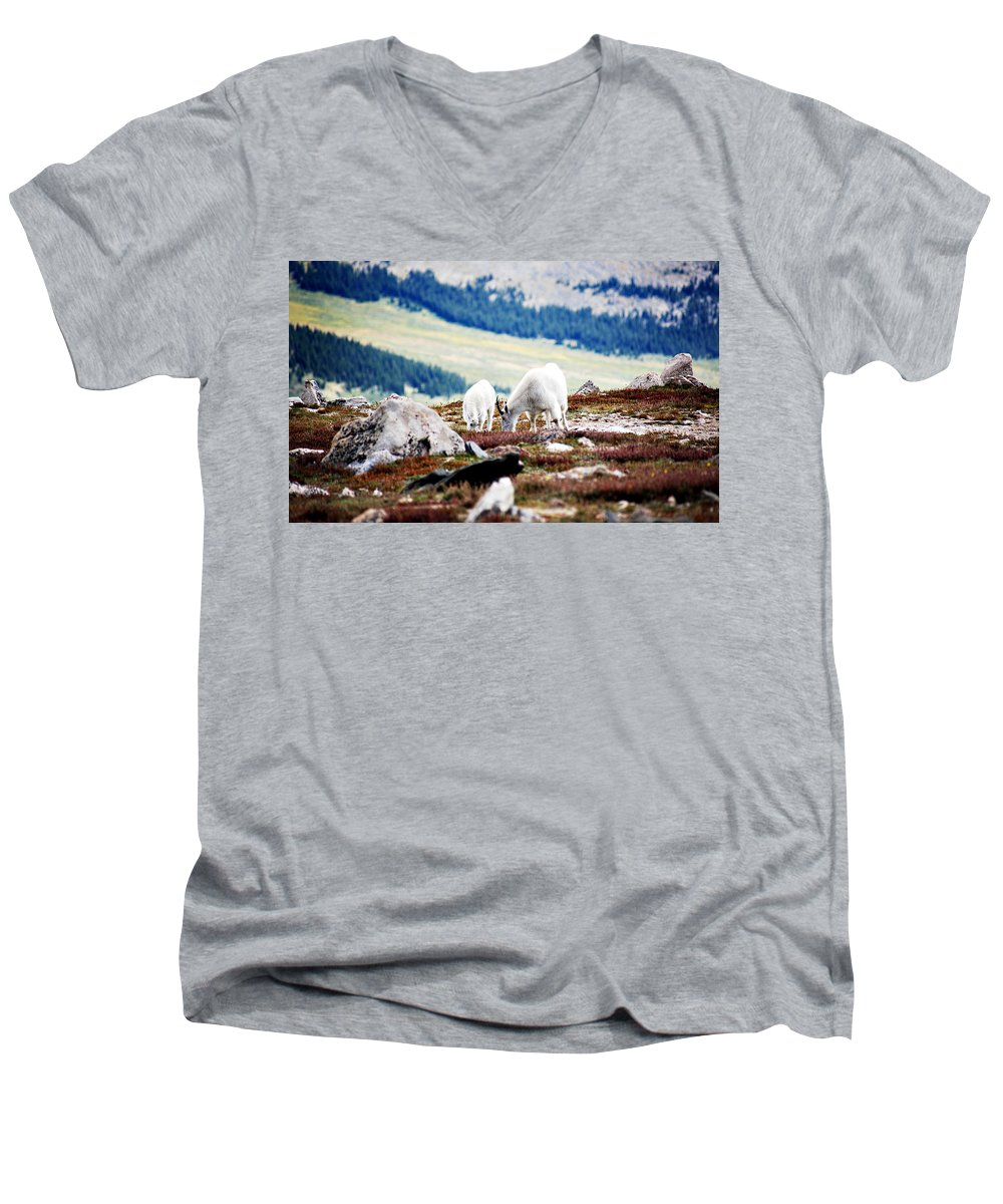 Animal Men's V-Neck T-Shirt featuring the photograph Mountain Goats 2 by Marilyn Hunt