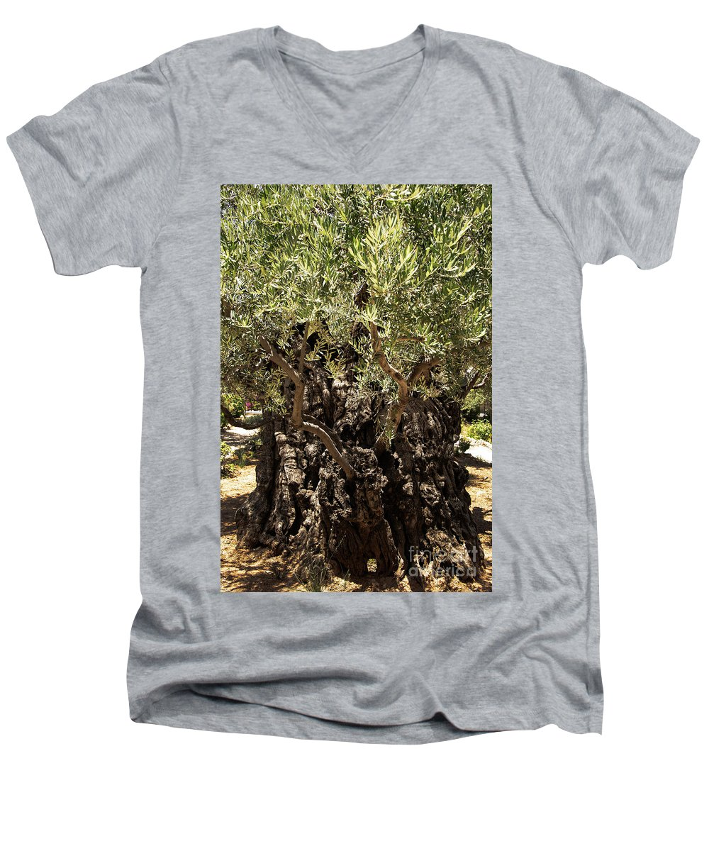 Olive Tree Men's V-Neck T-Shirt featuring the photograph Olive Tree by Mae Wertz