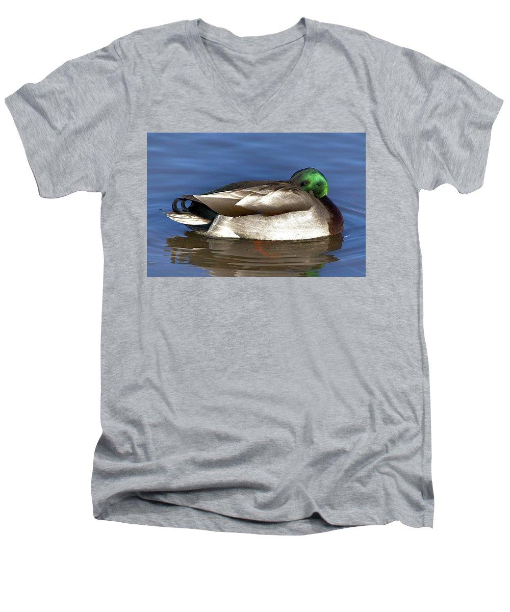 Duck Men's V-Neck T-Shirt featuring the photograph Peek A Boo by Robert Pearson