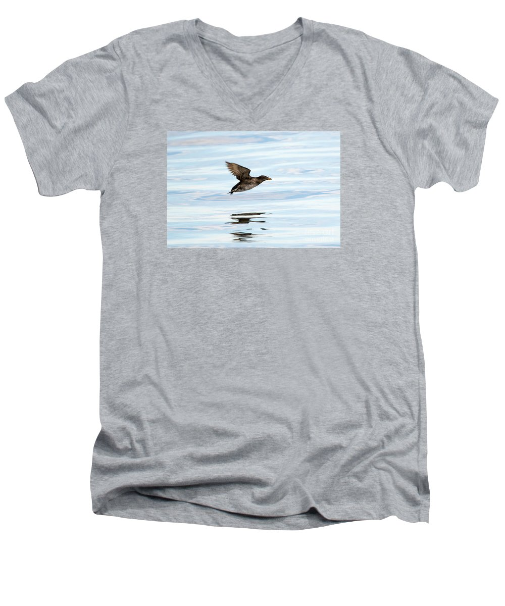 Auklets V-Neck T-Shirts