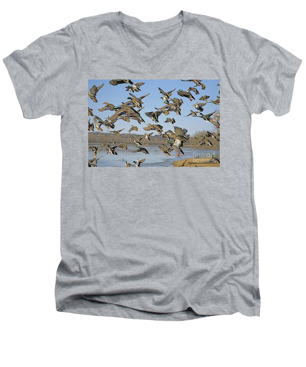 Ducks Men's V-Neck T-Shirt featuring the photograph The Mad Rush by Robert Pearson