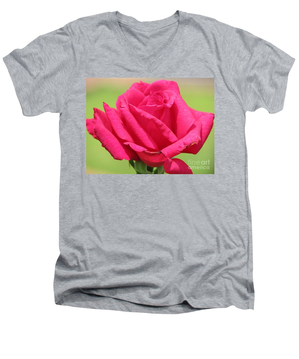Roses Men's V-Neck T-Shirt featuring the photograph The Rose by Amanda Barcon