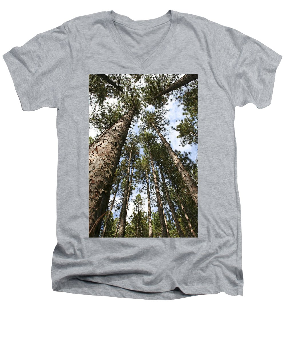 Autumn Men's V-Neck T-Shirt featuring the photograph Tree Stand by Margie Wildblood