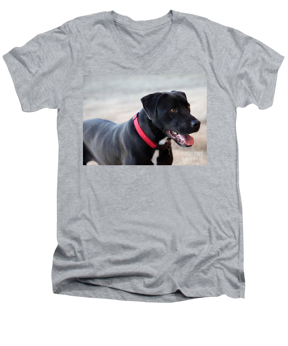 Dogs Men's V-Neck T-Shirt featuring the photograph Yes I Want To Play by Amanda Barcon
