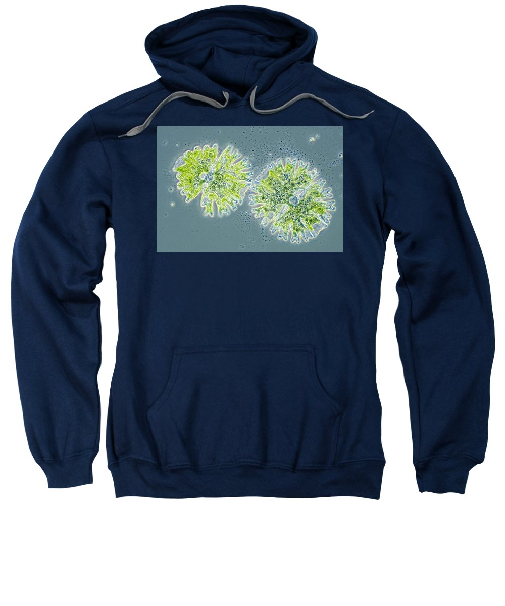 Biology Sweatshirt featuring the photograph Micrasterias by Michael Abbey