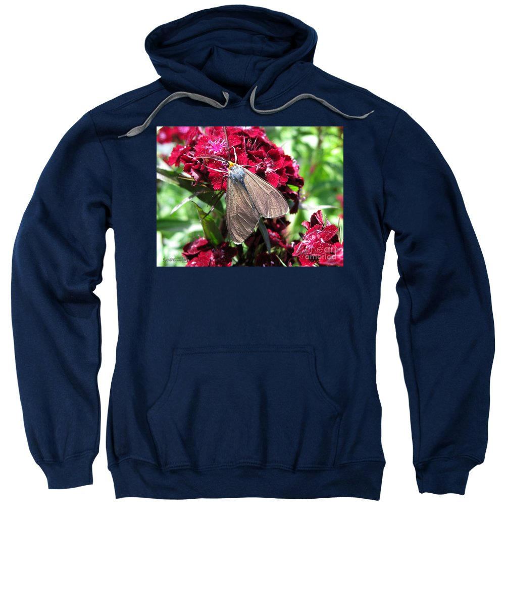 Mccombie Sweatshirt featuring the photograph Sweet William Named Sooty by J McCombie