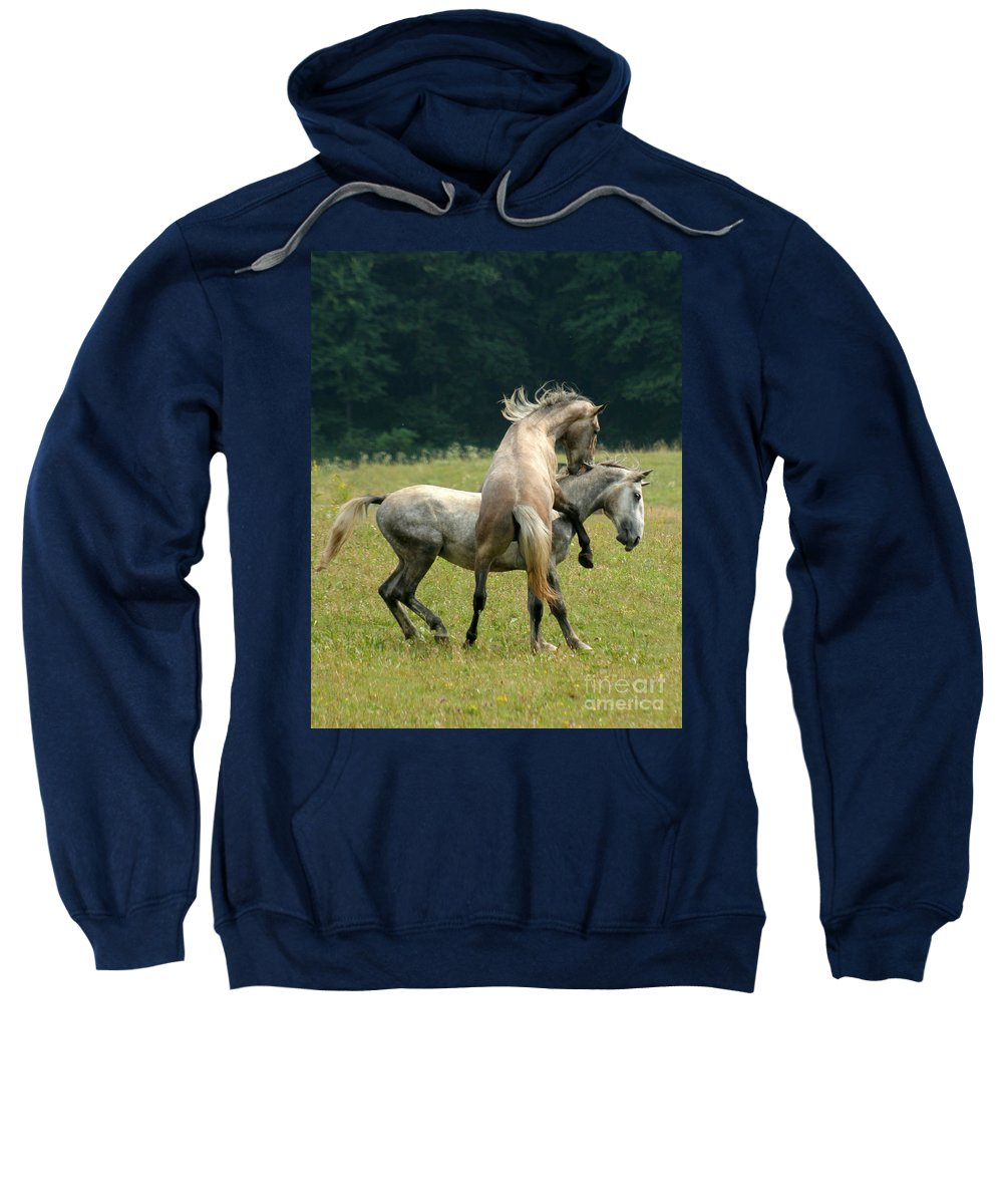 Horse Sweatshirt featuring the photograph The Bite by Angel Tarantella