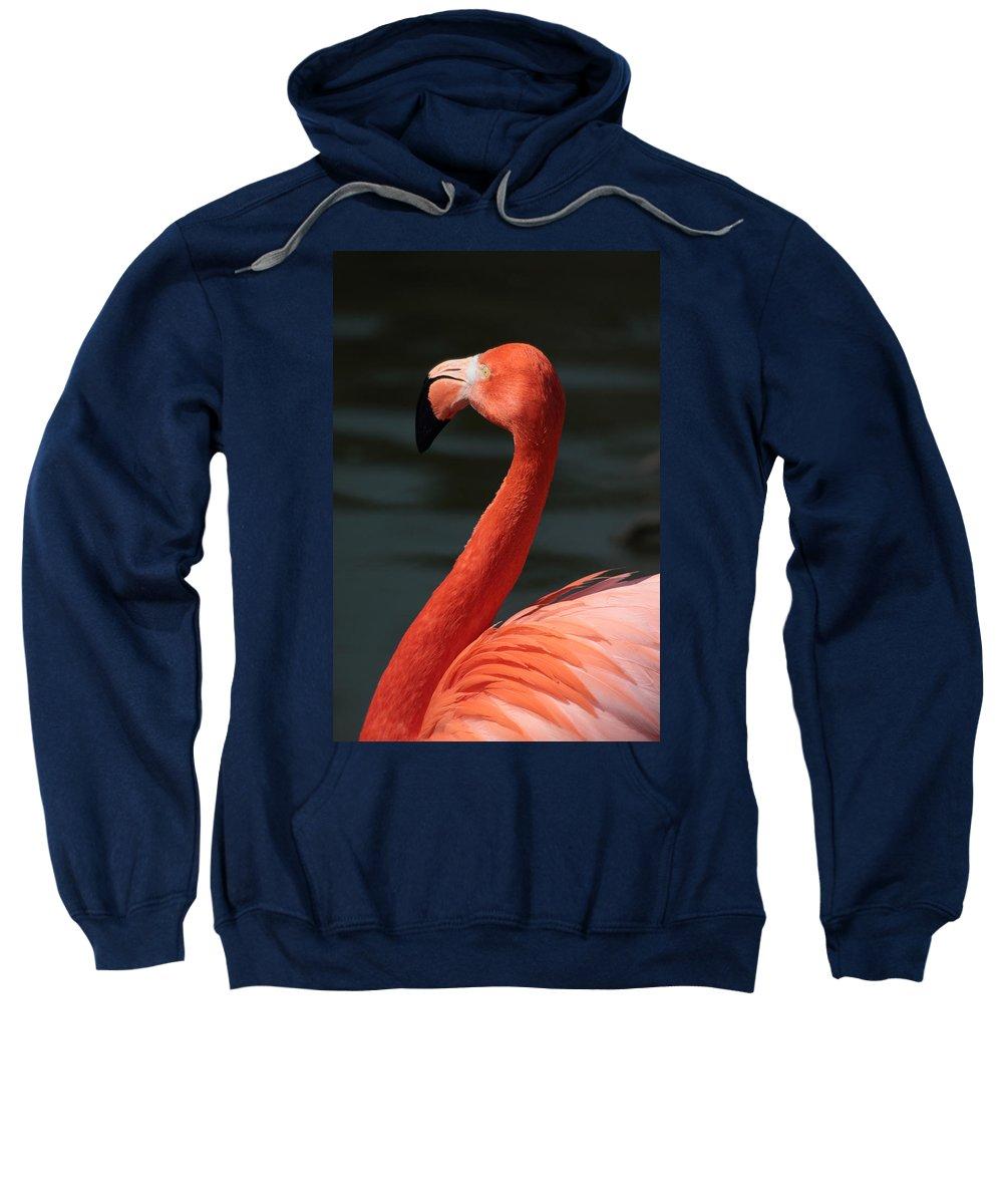 Flamingo Sweatshirt featuring the photograph Flamingo by Chris Smith