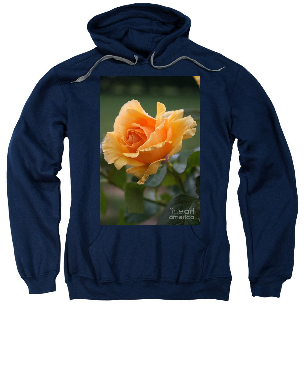 Rose Sweatshirt featuring the photograph In Full Bloom by Christiane Schulze Art And Photography