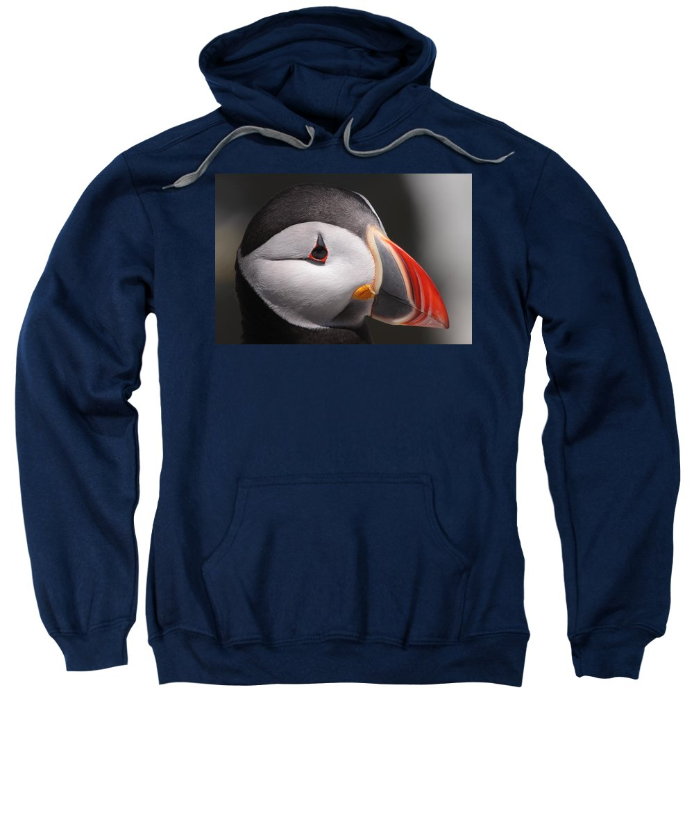 Puffin Sweatshirt featuring the photograph Atlantic Puffin Portrait by Bruce J Robinson