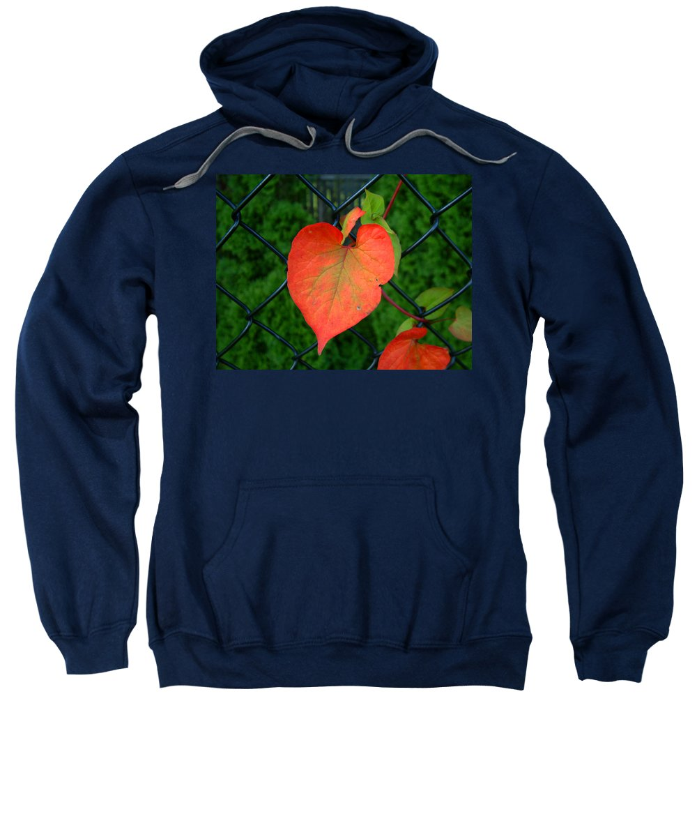 Vine Sweatshirt featuring the photograph Autumn In July by RC DeWinter