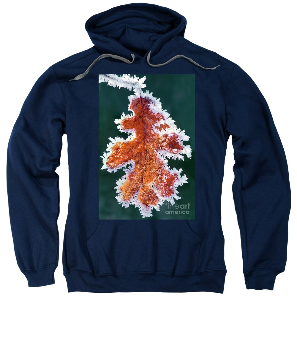 North America Sweatshirt featuring the photograph Black Oak Leaf Rime Ice Yosemite National Park California by Dave Welling