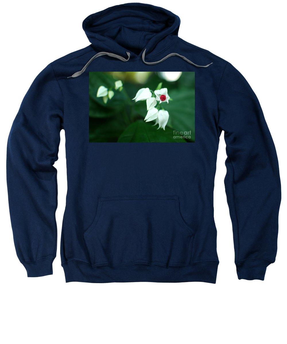 Clerodendrum Sweatshirt featuring the photograph Bleeding Heart Vine Blossom by Floyd Menezes
