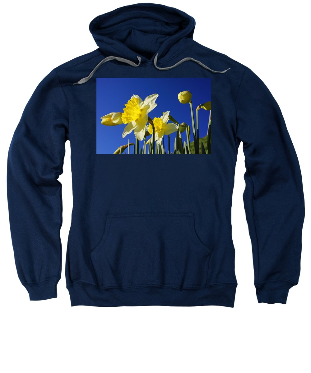 Blue Sweatshirt featuring the photograph Blue Sky Spring Bright Daffodils Flowers by Baslee Troutman
