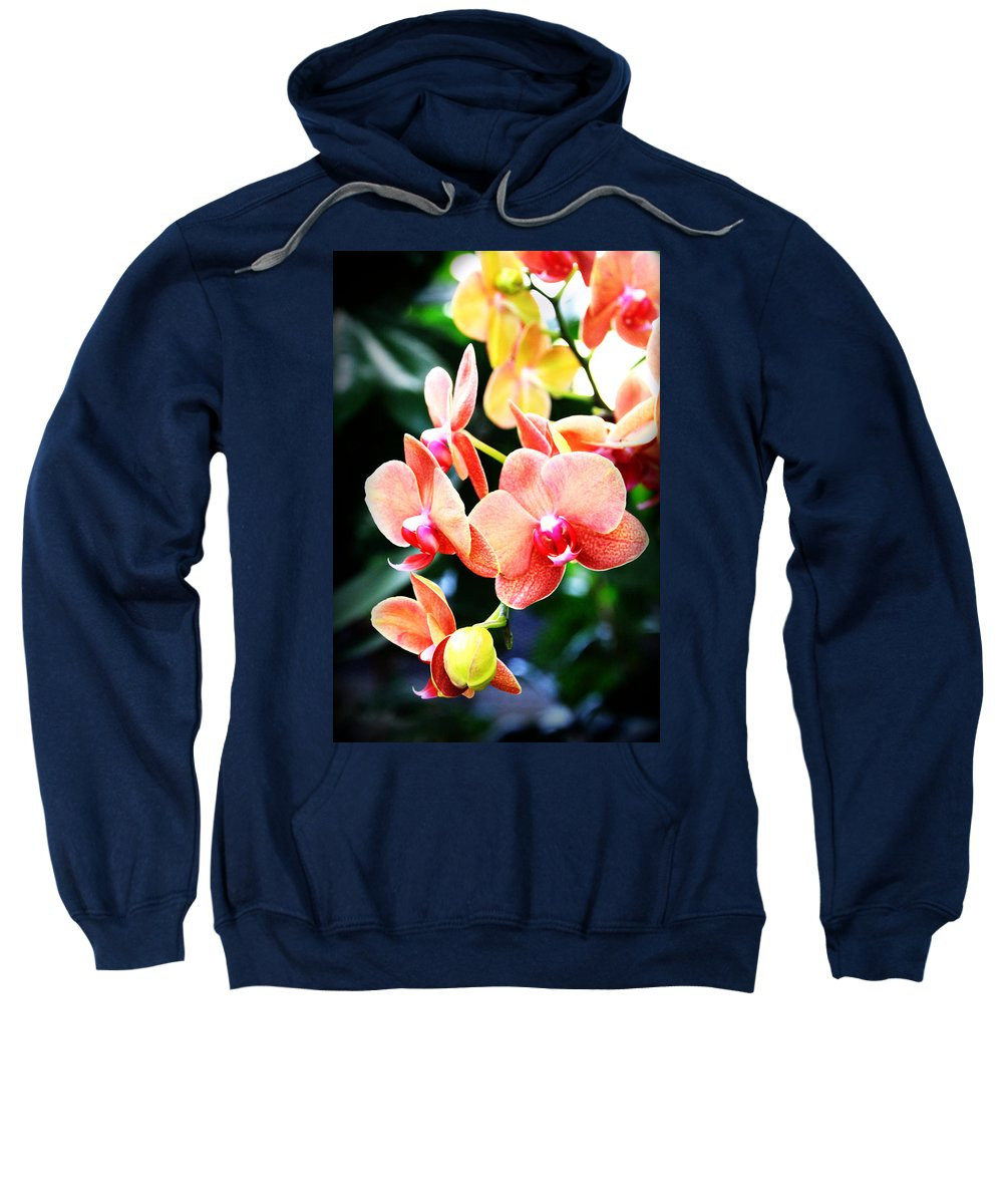 Bloom Sweatshirt featuring the photograph Blushing Beauty by Tina Meador