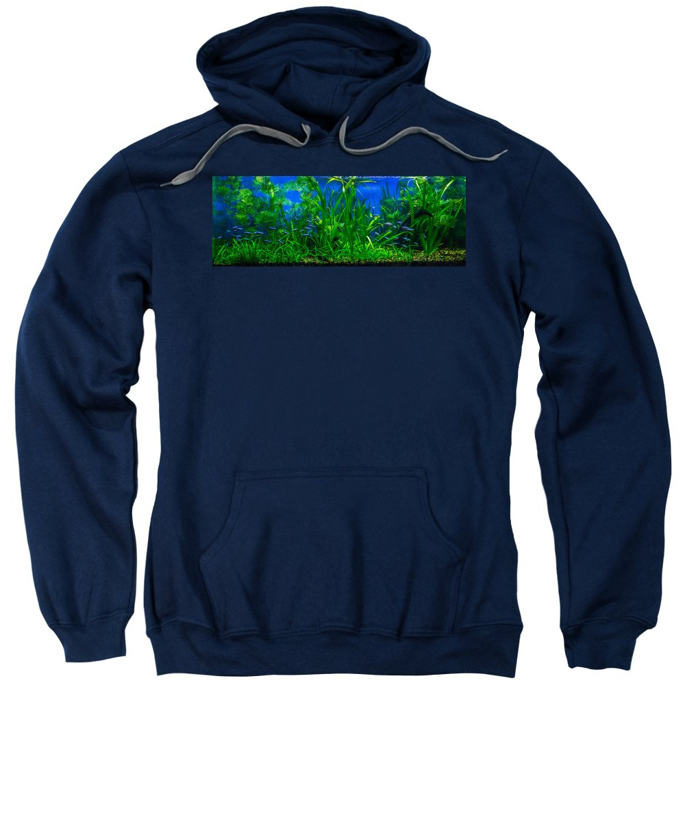 Cardinal Sweatshirt featuring the photograph Cardinal Tetras by Chad Rowe
