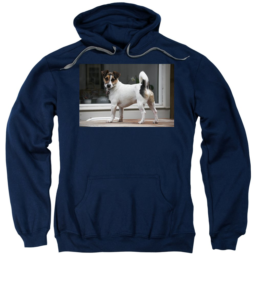 Animal Sweatshirt featuring the photograph Chip by David Resnikoff