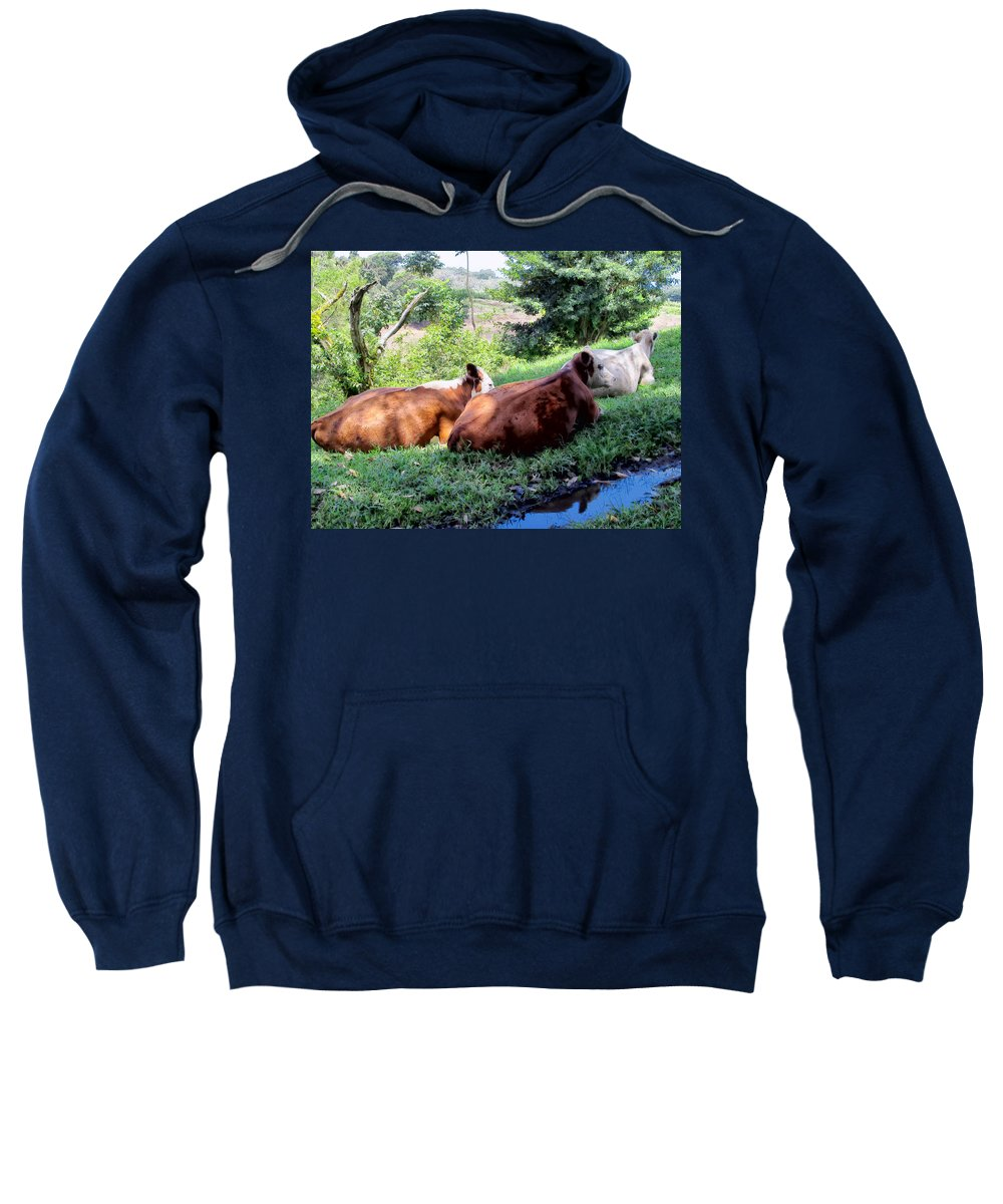 Cattle Sweatshirt featuring the photograph Cow 6 by Dawn Eshelman
