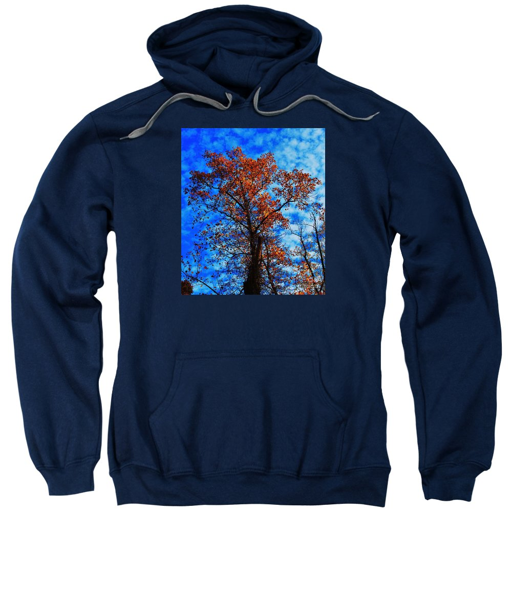 Tree Art Fall Outdoors Copper Leaves Sky Nature Seasonal Stock Shot Vertical Autumn Metal Frame Highly Recommended Canvas Print Poster Print Available On Phone Cases Tote Bags Duvet Covers Shower Curtains Throw Pillows And T Shirts Sweatshirt featuring the photograph Fall Majesty by Marcus Dagan