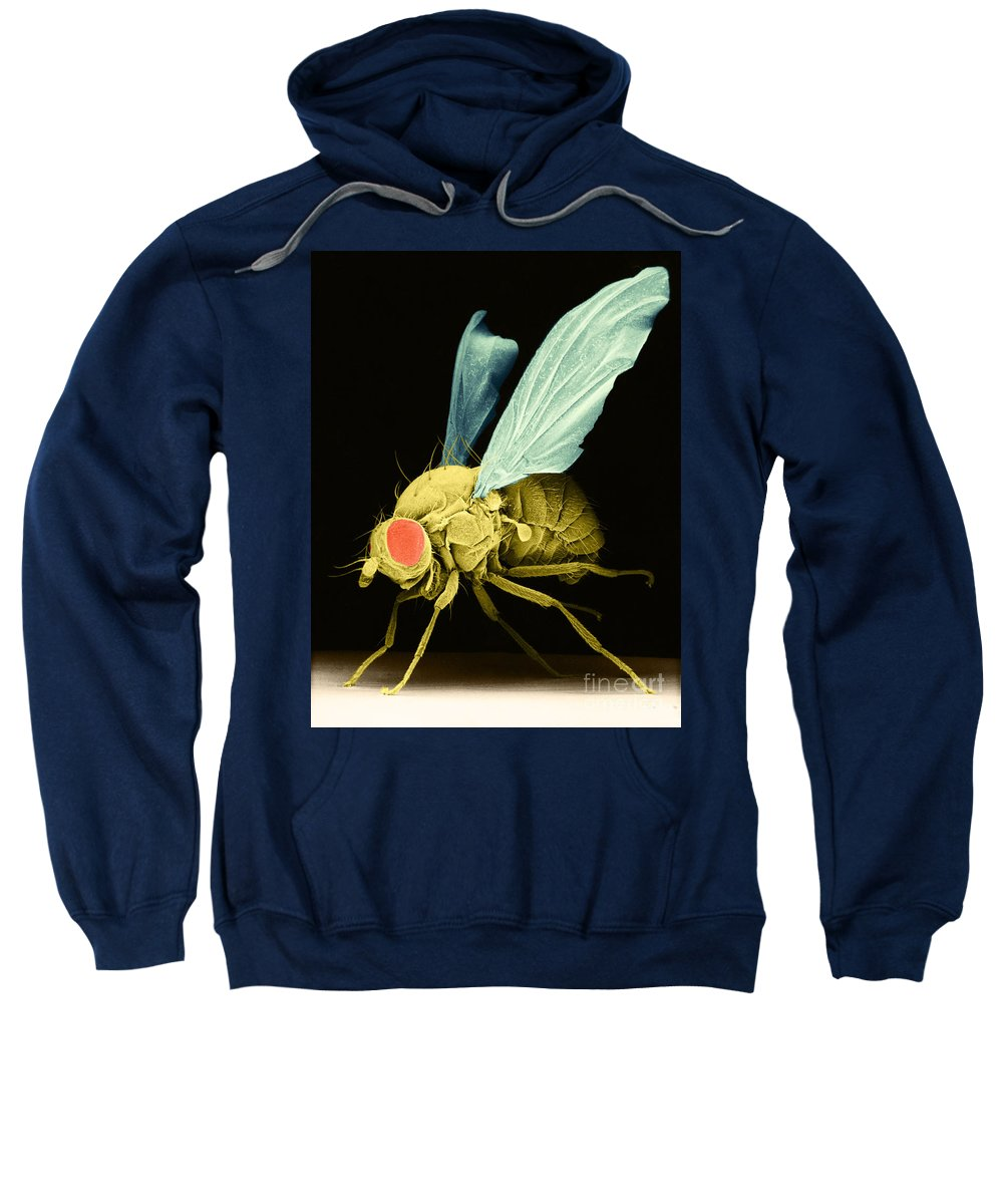 Fruitfly Sweatshirt featuring the photograph Fruit Fly Sem by David M Phillips