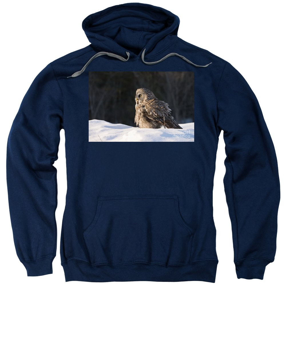 Great Gray Owl Sweatshirt featuring the photograph Great Gray Owl Pictures 788 by World Wildlife Photography