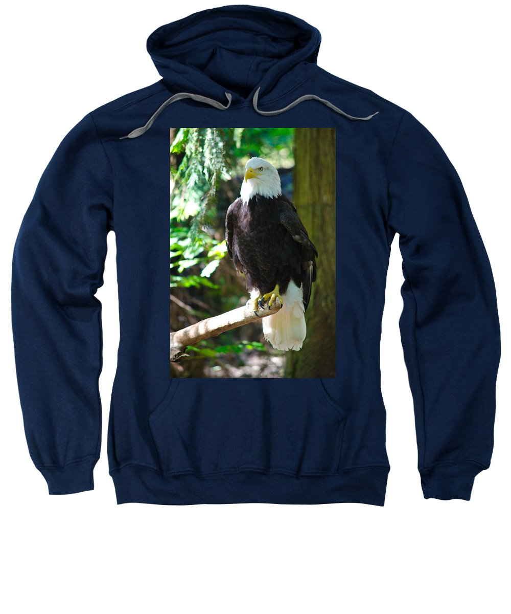 Bald Eagle Sweatshirt featuring the photograph Guarding Liberty by Tikvah's Hope