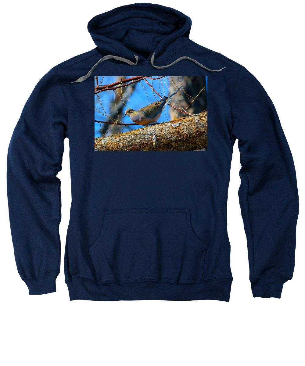 Bird Sweatshirt featuring the photograph Little Birdie 2 by Brent Dolliver