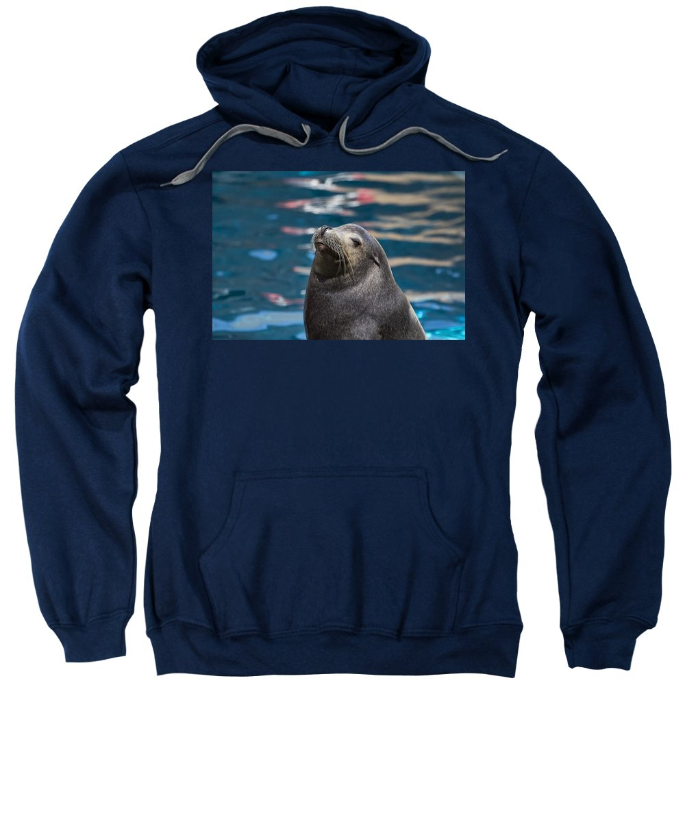 California Sea Lion Sweatshirt featuring the photograph Looking Up by Douglas Barnard