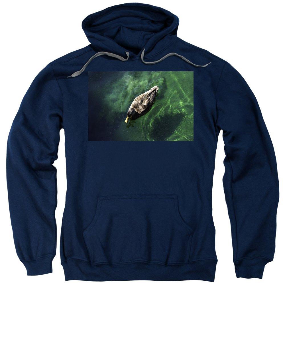Mallard Sweatshirt featuring the photograph Mallard Duck On Green Pool by Peter Lloyd
