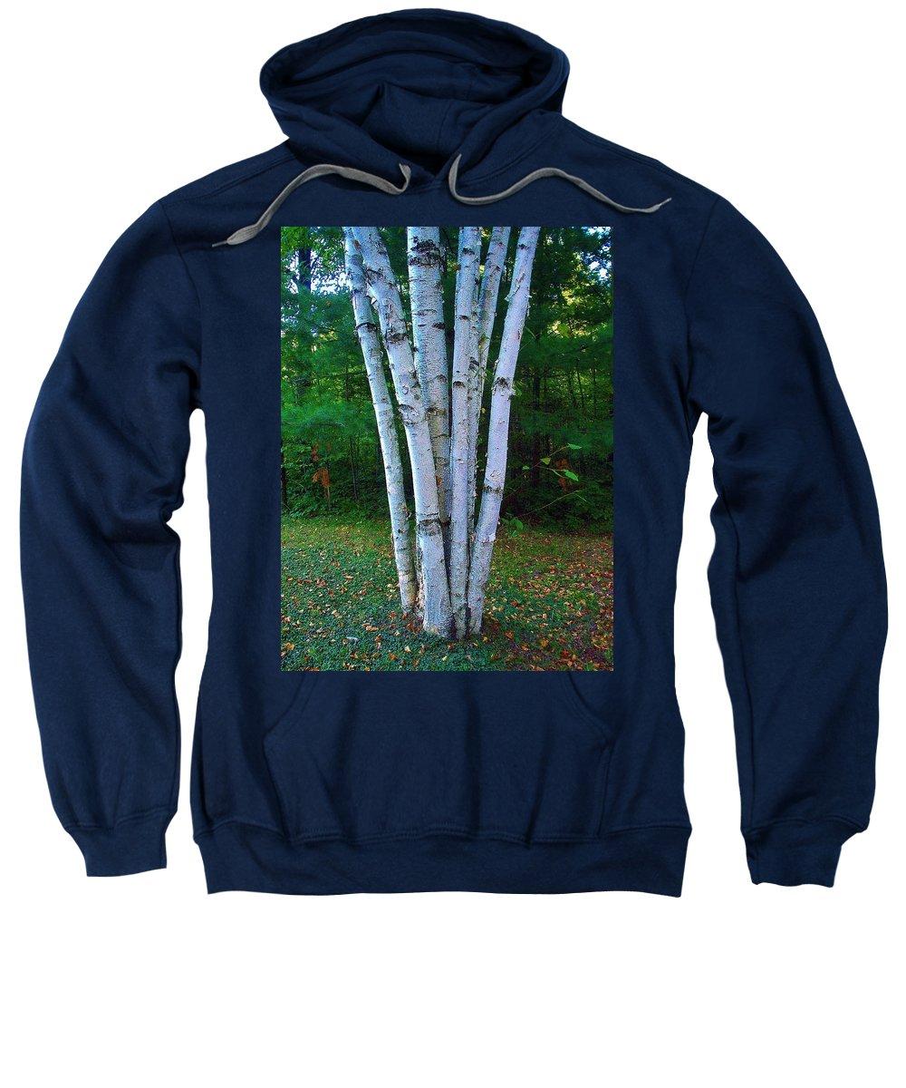 Birch Trees Sweatshirt featuring the photograph Micro-grove by Daniel Thompson