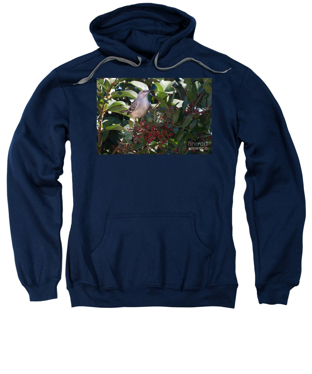 Mocking Sweatshirt featuring the photograph Mocking Bird And Berries by Photos By Cassandra