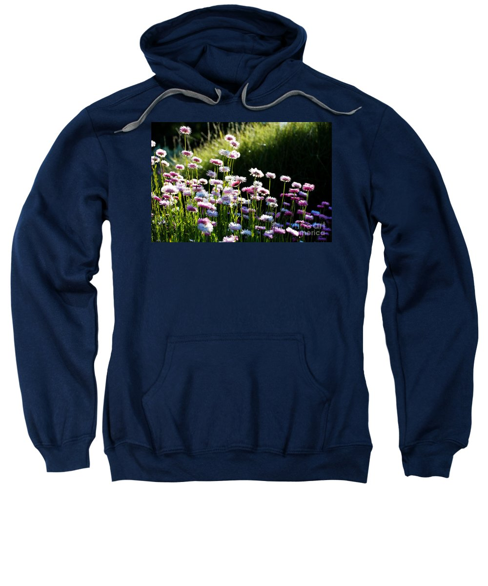 Pink Flower Sweatshirt featuring the photograph Morning Sun by Yew Kwang