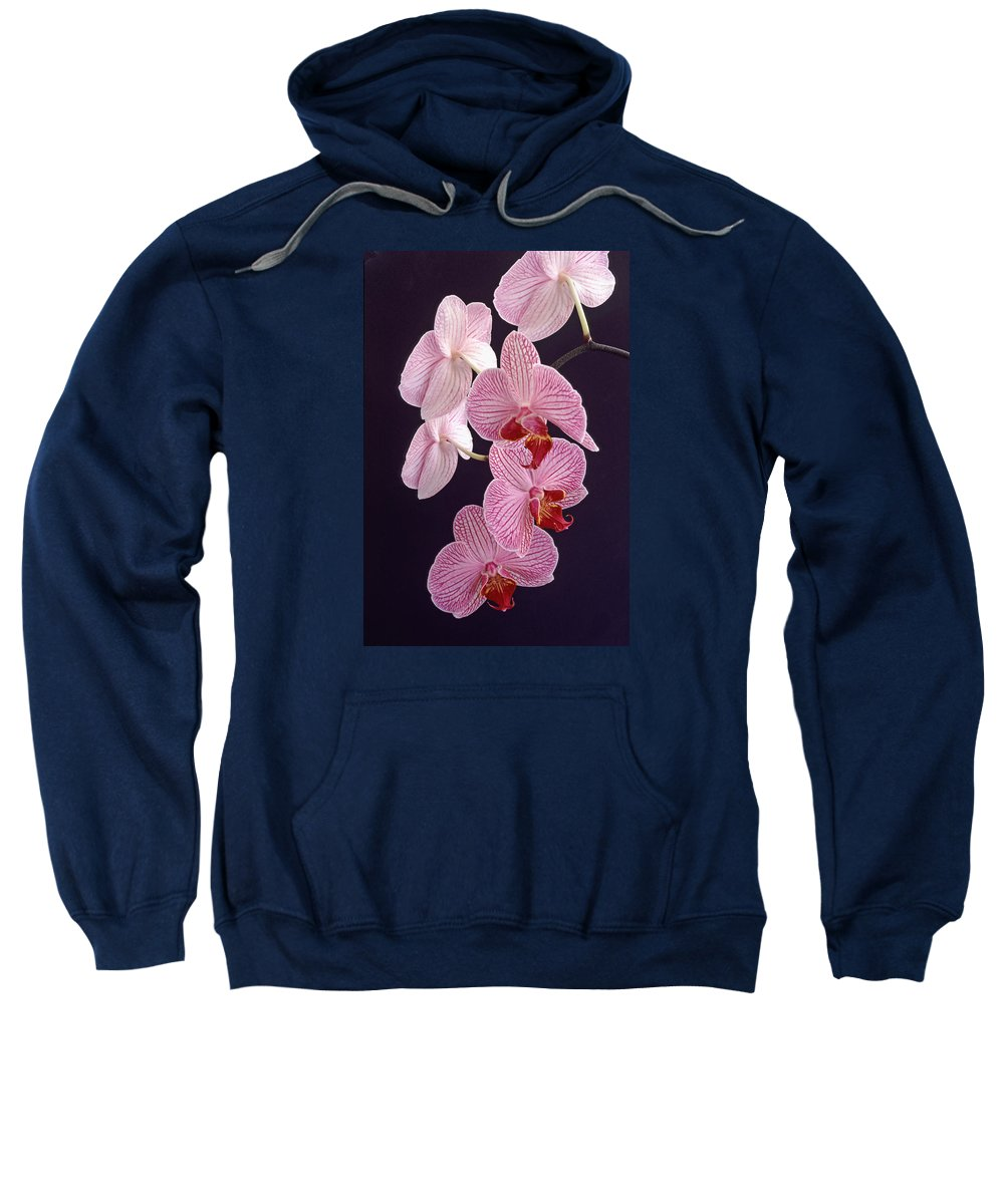 Orchid Sweatshirt featuring the photograph Orchid Cascade by Bill Morgenstern