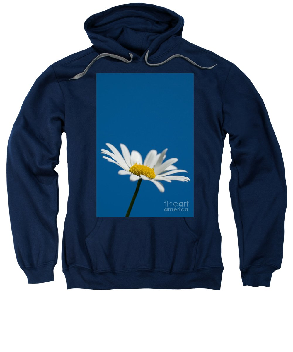 Asteraceae Sweatshirt featuring the photograph Oxeye by Anne Gilbert