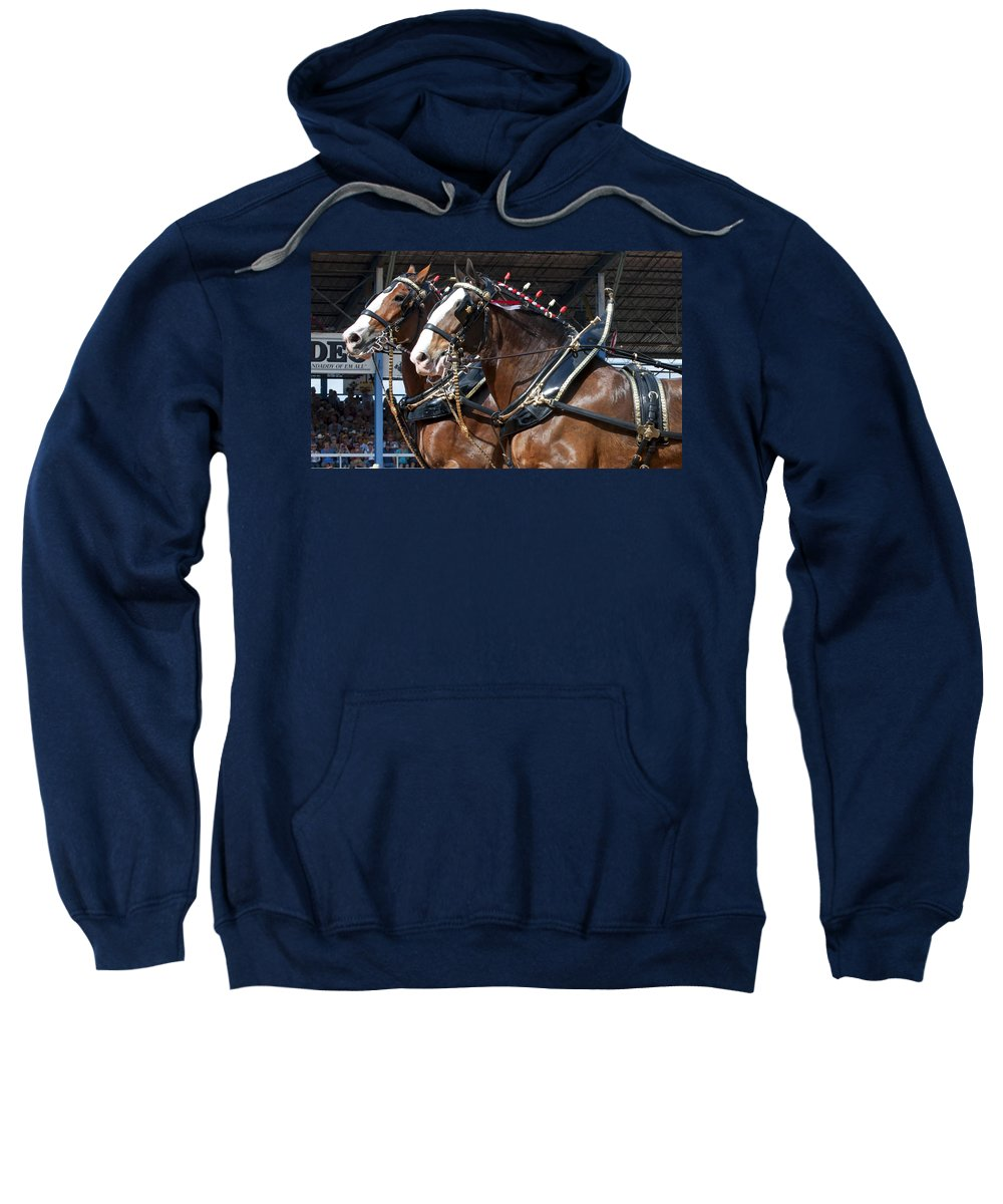 Pair Sweatshirt featuring the photograph Pair Of Budweiser Clydesdale Horses In Harness Usa Rodeo by Sally Rockefeller