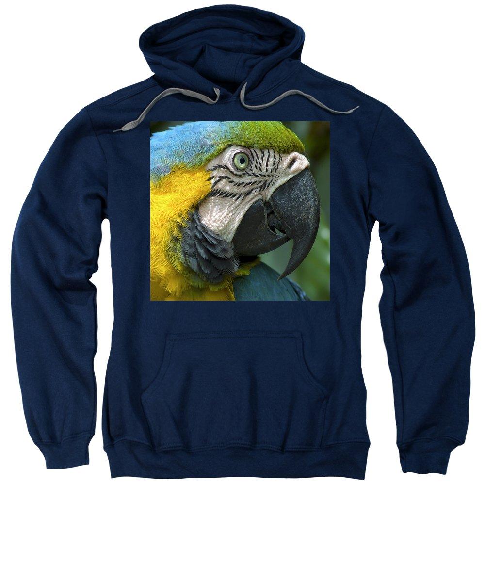 Beak Sweatshirt featuring the photograph Parrot 9 by Ingrid Smith-Johnsen