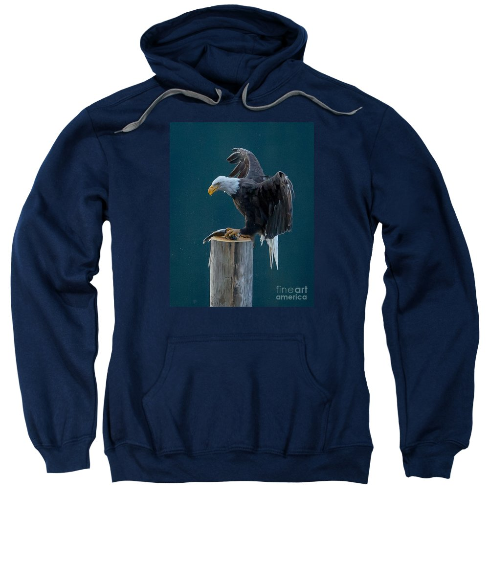 Bald Eagle Sweatshirt featuring the photograph Pole Position by Joy McAdams