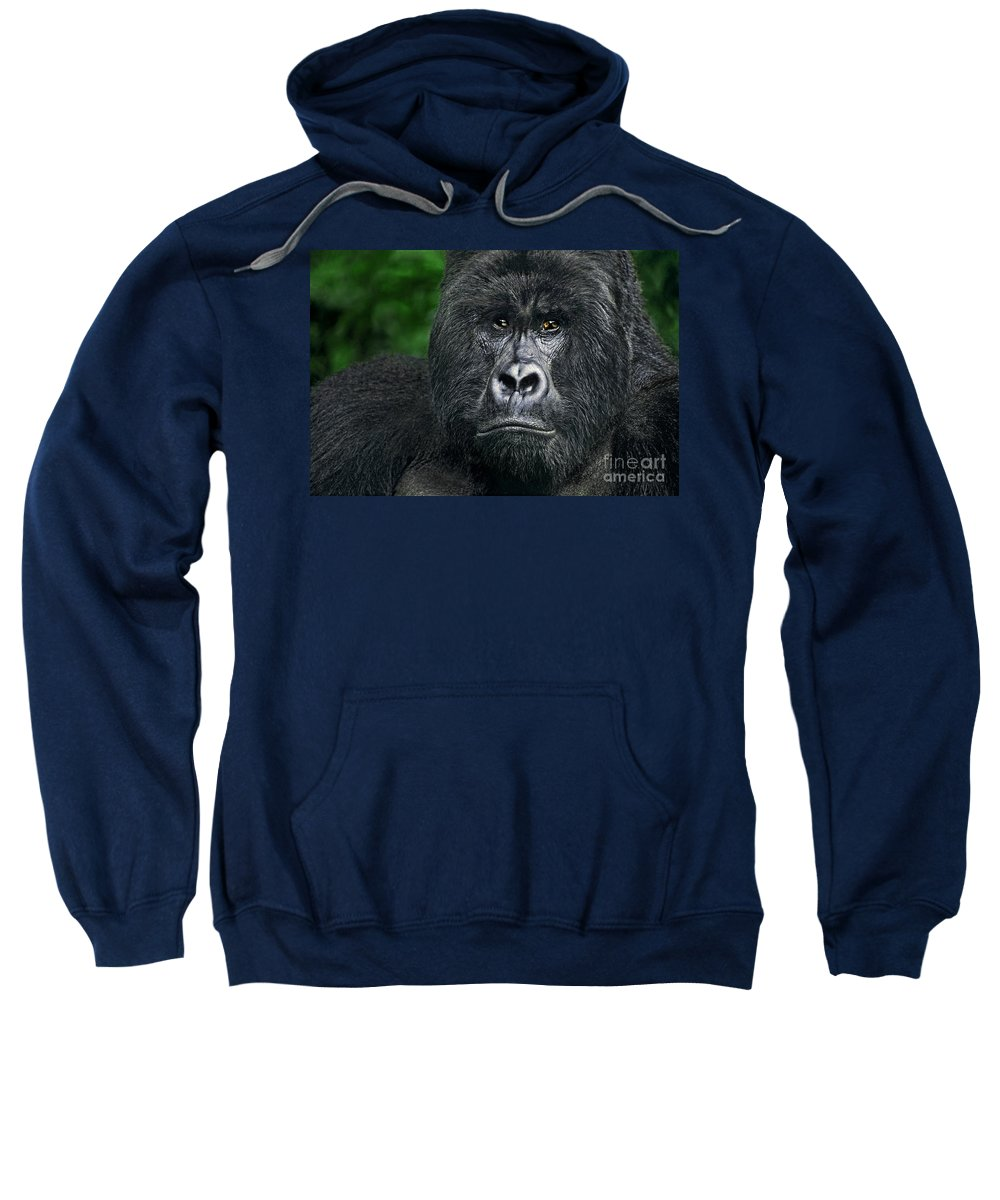 Africa Sweatshirt featuring the photograph Portrait Of A Wild Mountain Gorilla Silverbackhighly Endangered by Dave Welling
