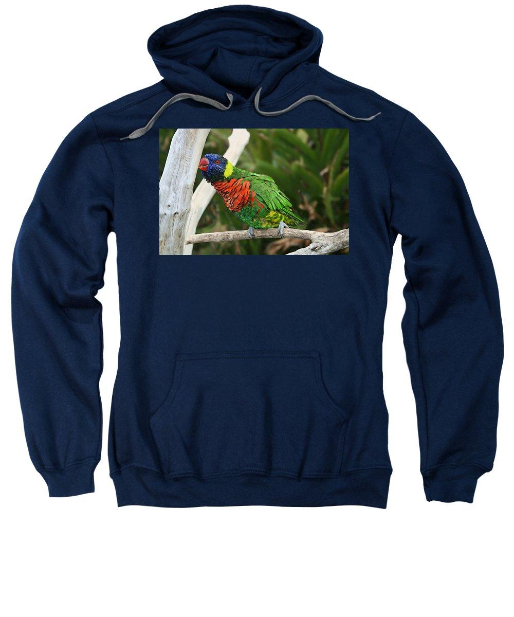 Pretty Bird Sweatshirt featuring the photograph Pretty Bird by Ellen Henneke