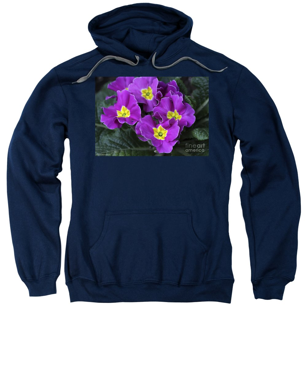 Flowers Sweatshirt featuring the photograph Primrose Purple by Deborah Benoit