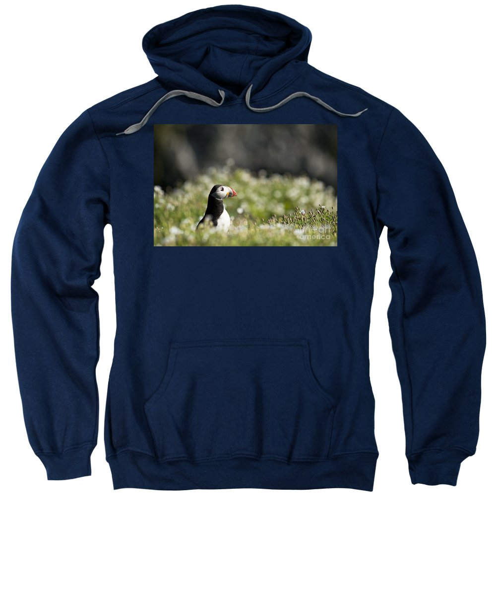 Atlantic Sweatshirt featuring the photograph Puffin In Sea Campion by Anne Gilbert